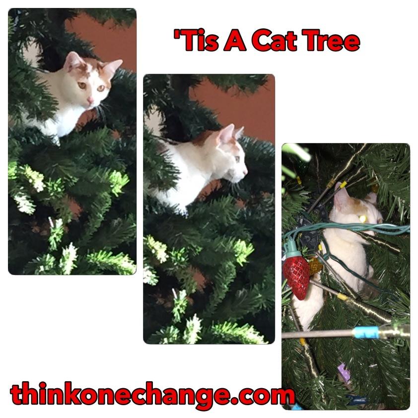 'Tis a Cat Tree